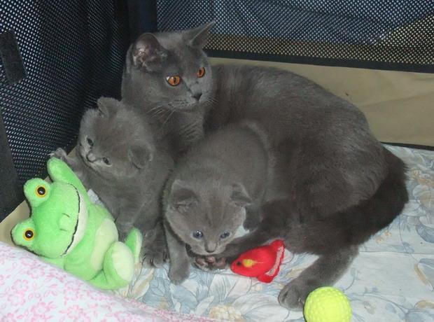 chatons-24-09-2012.jpg